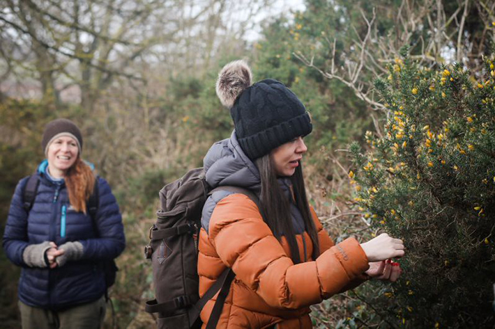 Woman picking gorse (c) Wild Roots Foraging