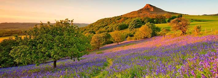 Roseberry Topping by Colin Carter