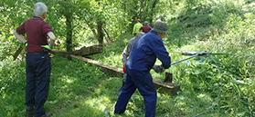 Volunteers on work task