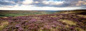Heather moorland at Rosedale by Chris Ceaser