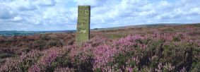 Heather moorland with handstone