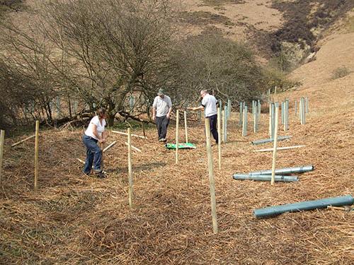 Tree planting by volunteers, Horcum