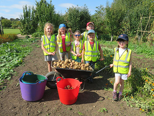 Young explorers collecting potatoes