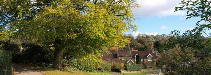 Tree in village scene