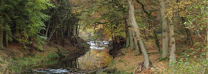 Woodland near river at Hawnby Hill by Mark Antcliff