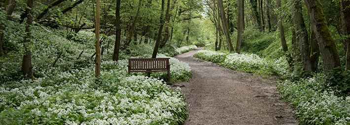 Rail-Trail,-Goathland-Incline-wild-garlic