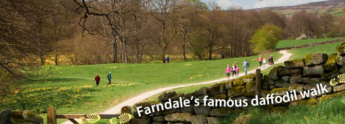 Farndale daffodil walk by Shockthesenses