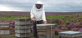 Beekeeper by Tess Bunney