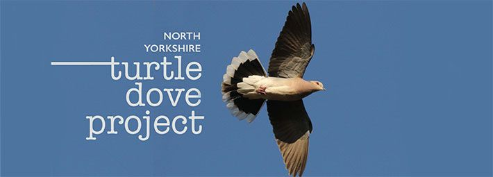 North Yorkshire Turtle Dove Project