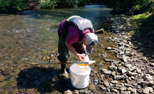 Volunteer collecting Riverfly data