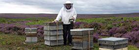 Beekeeper Allan Jefferson by Tessa Bunney