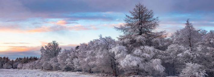 Winter trees by Steve Bell