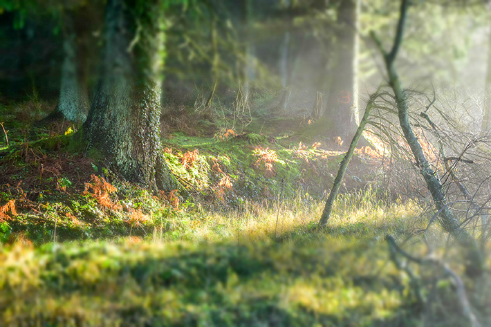 Dalby Forest Credit Forestry England/Michael Hill