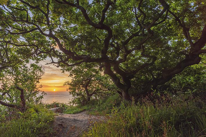 Hayburn Wyke woods (c) Tom Mutton