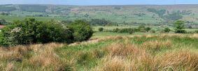 Marshy gressland