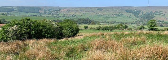 Marshy grassland