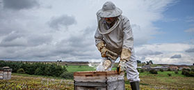 Westfield Honey in the North York Moors by Polly Baldwin